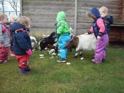 Kinderboerderij (De Groene Helden) 3