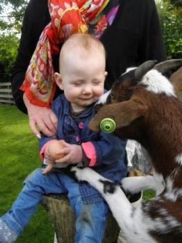 Kinderboerderij (De Groene Helden) 5